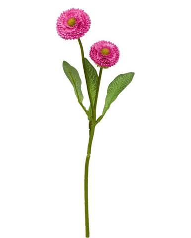 FLORISTA Sedmokráska - fuchsiová