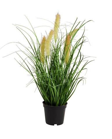 FLORISTA Sitina tráva v kvetináči 8 cm