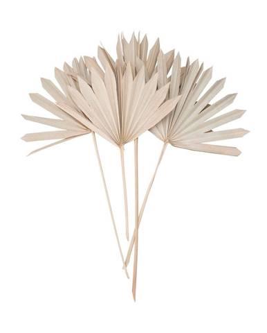 FLOWER MARKET Sušený palmový list 4 ks 60 cm